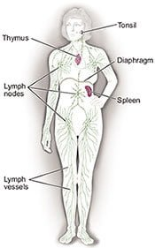 Lymph System. National Cancer Institute.