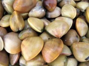 Clams Are Chock Full of Vitamin B12.